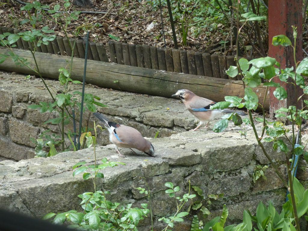 Une après-midi au jardin