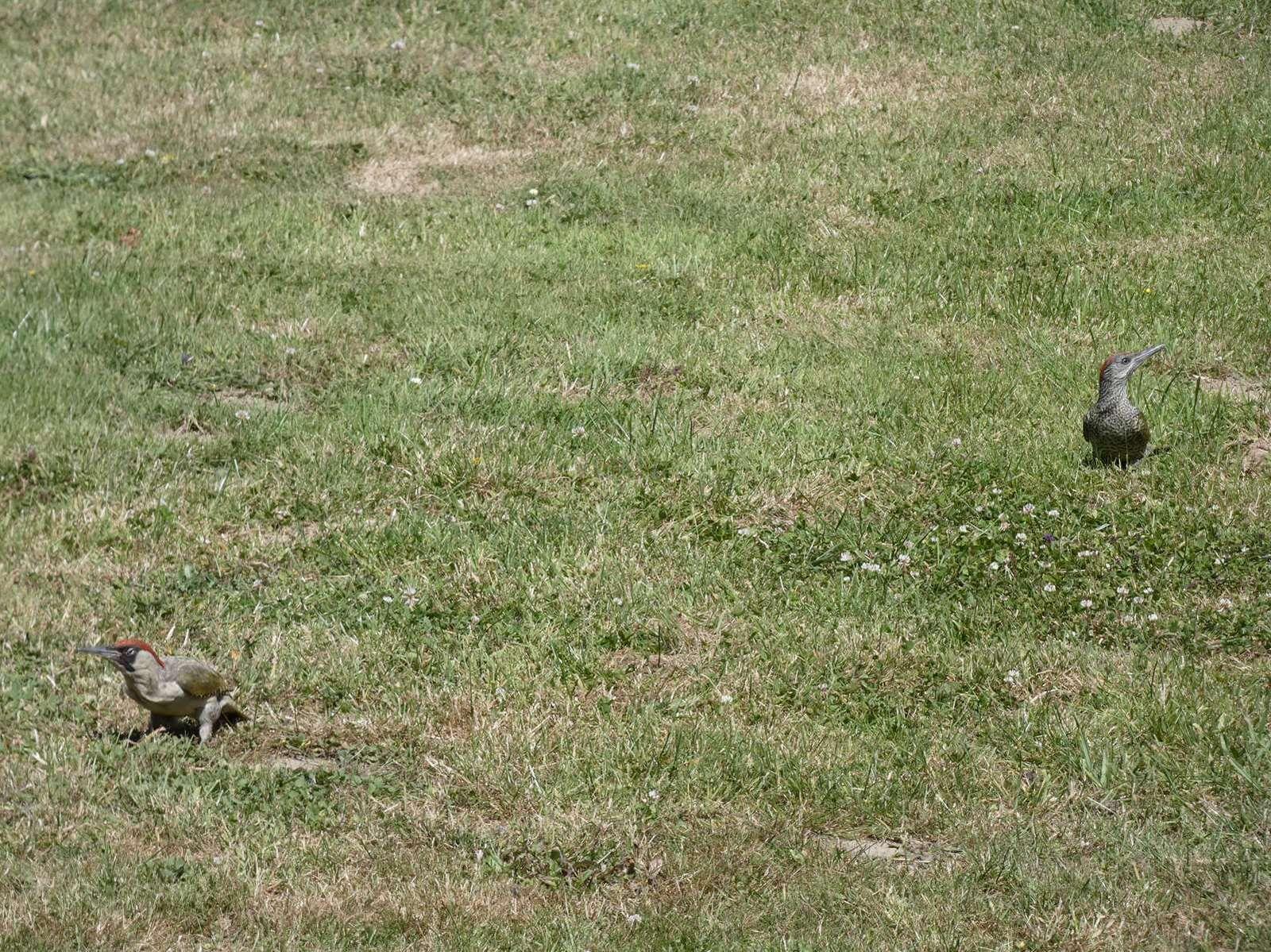 La famille pic-vert en visite au jardin