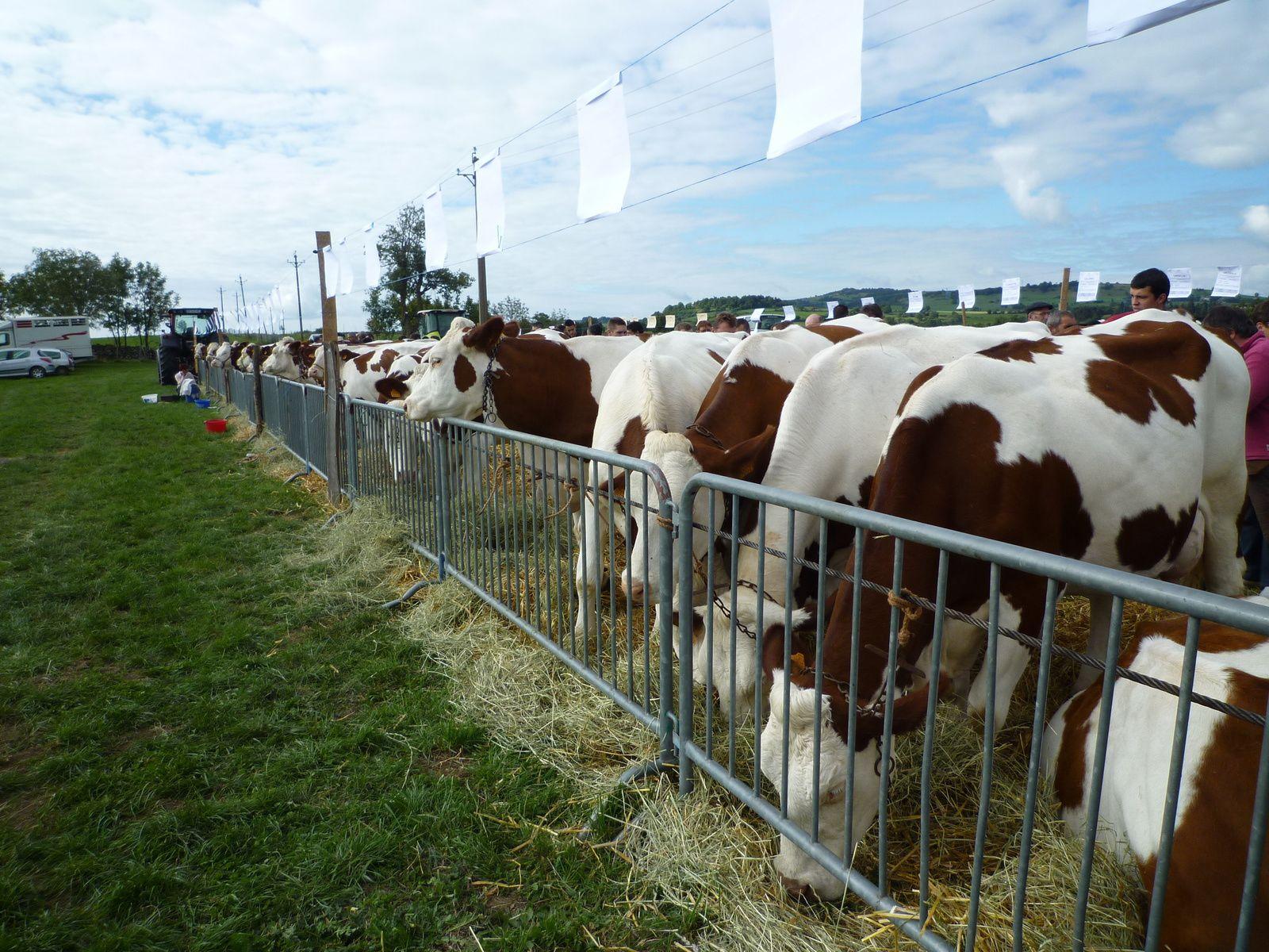 Résultats du comice agricole de Chazeloux Bonnac