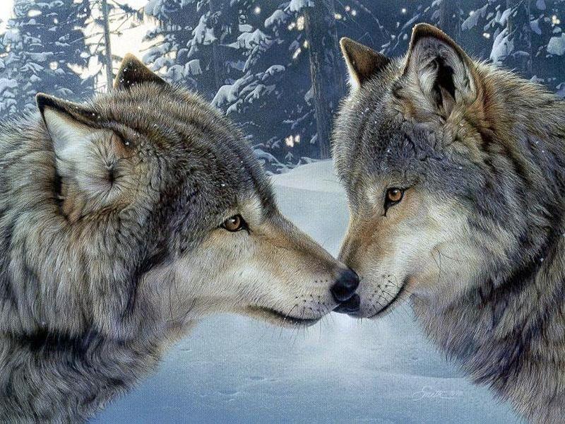 animation de samedi 16 décembre avec le Loup (d'Auzou)