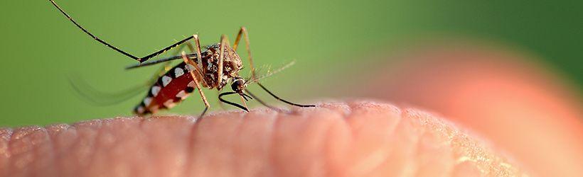 Massiac : halte au chikungunya