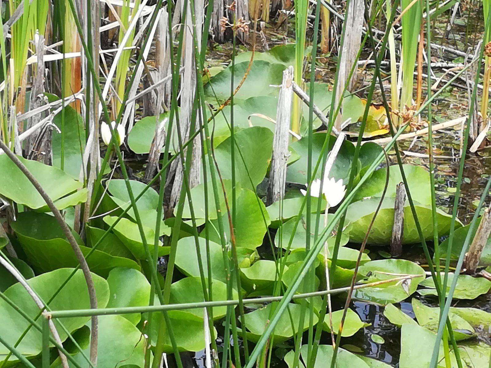Sortie à l'étang de Lemps