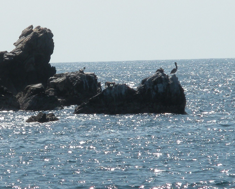 Un paradis pour les oiseaux marins, ici un pélican.