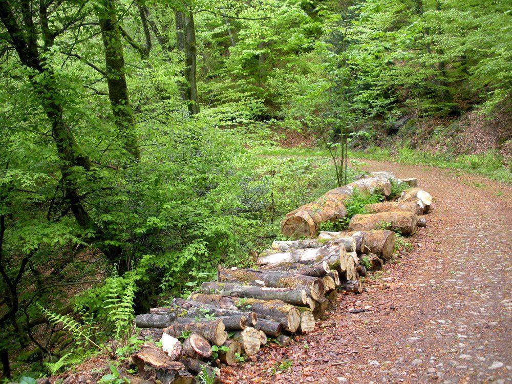 Les ressources de la forêt bourguignonne.