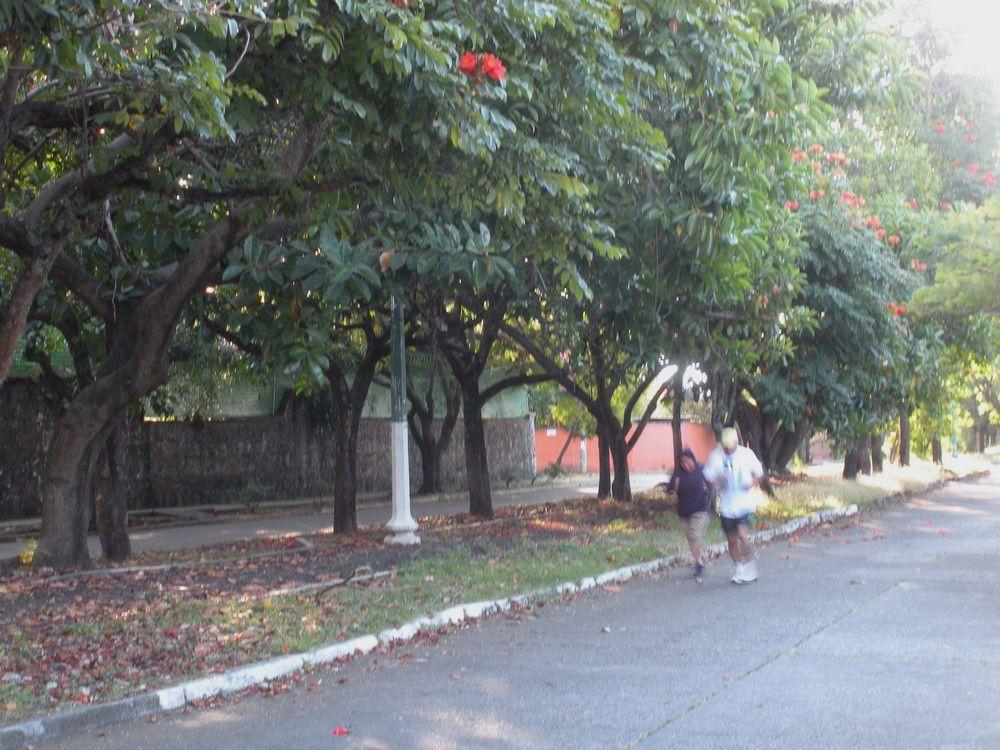Les frondaisons tropicales variées assurent un minimum d'ombre toute la journée.