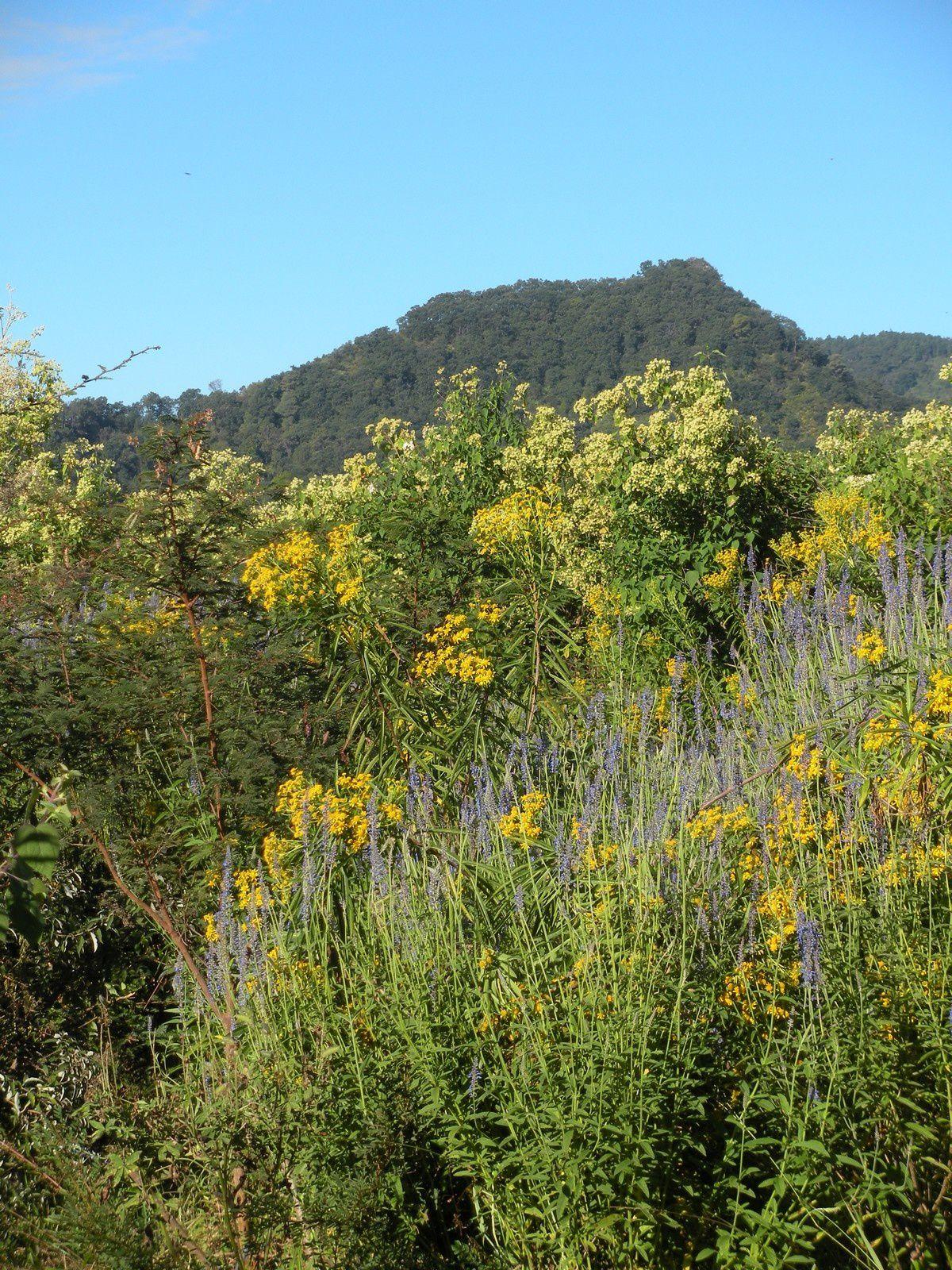 Tout près de Cuernavaca, respirez comme ça sent bon !
