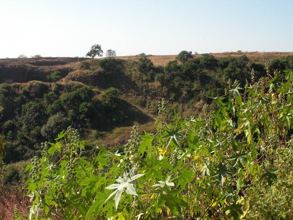 Au delà de la végétation luxuriante, la crête plus aride