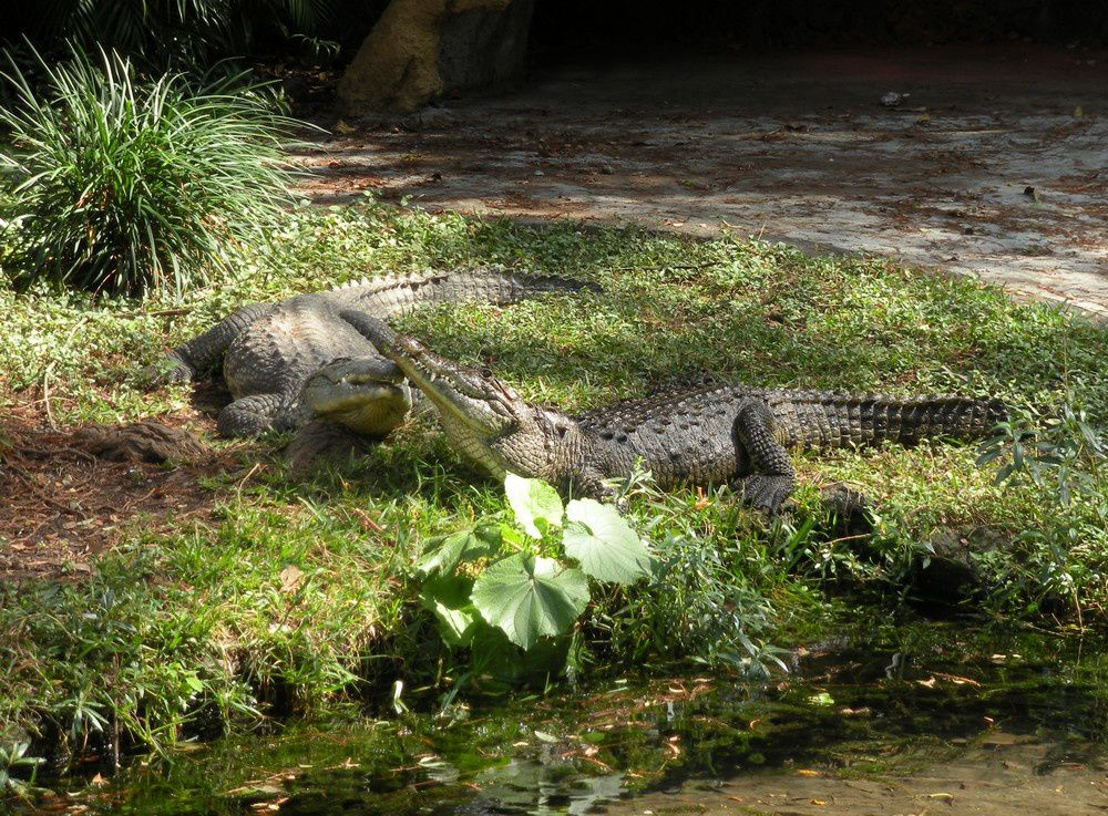 """Ondes fraîches et """"cocodrilos"""" au bord de l'eau..."""