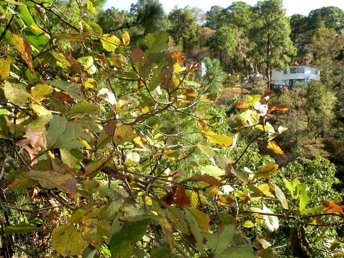 Balade botanique près de Cuernavaca : les petites fleurs récompensent l'effort