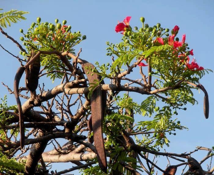 Mes photos de  fleurs qui bleuissent Cuernavaca en hommage au médecin mort du coronavirus