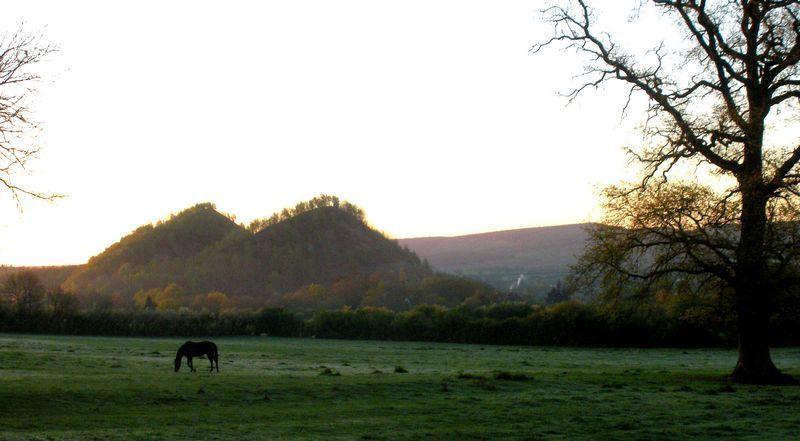 Malgré la fraîcheur matinale, chevaux et vaches charolaises passent la nuit dans les pâtures.