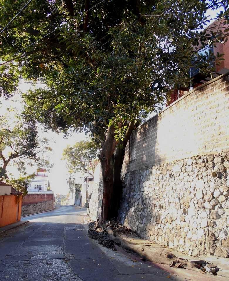 LES PHOTOS DU JOUR AU MEXIQUE : ARBRE, PUB et PETROLE