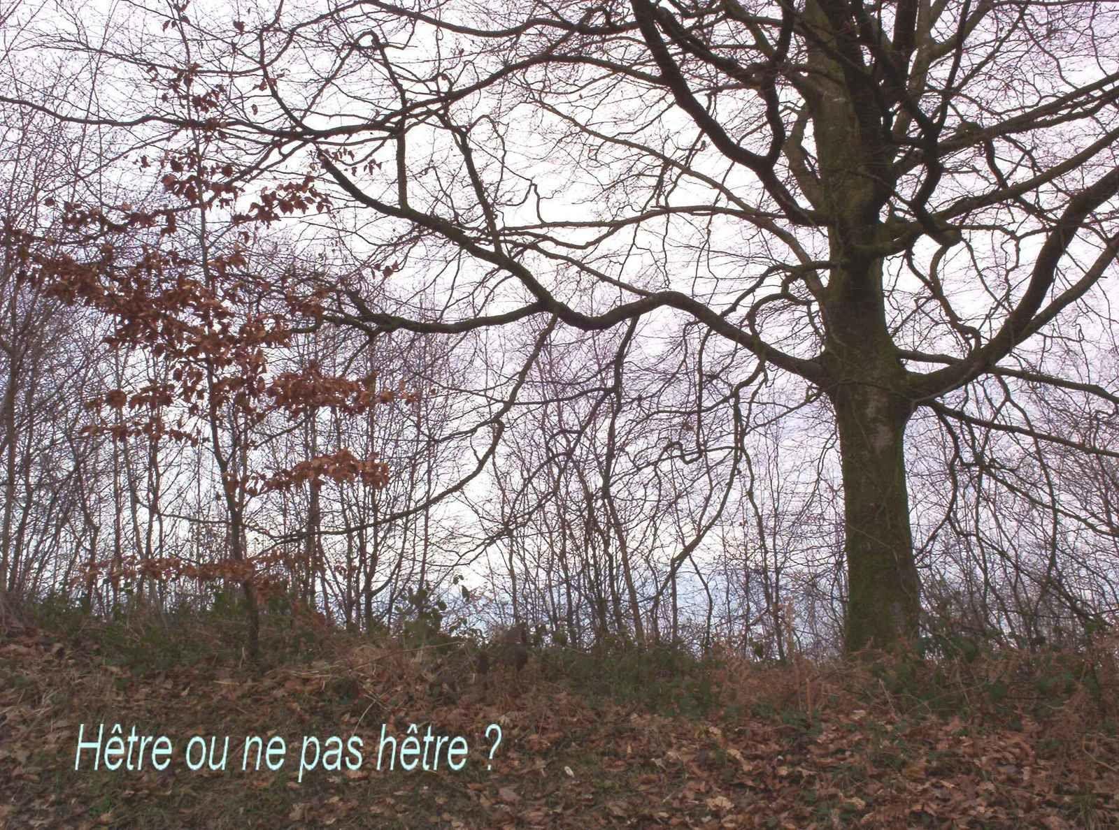 Mon Petit Journal éditions.  Une nouvelle de l'auteur de ce blog,  « L'arbre aux souvenirs »