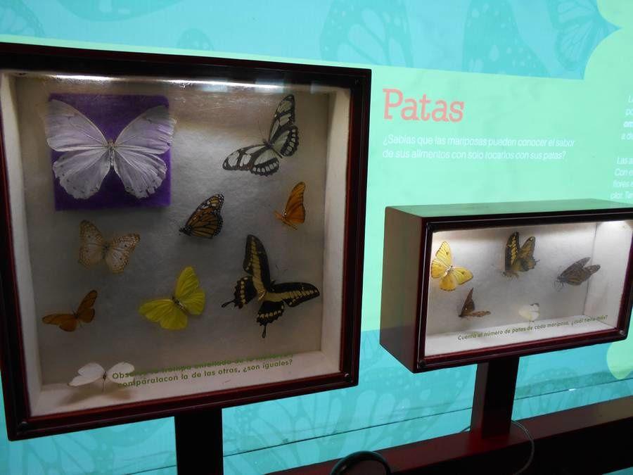 L'imagination s'envole comme un cerf-volant au musée des enfants Papalote