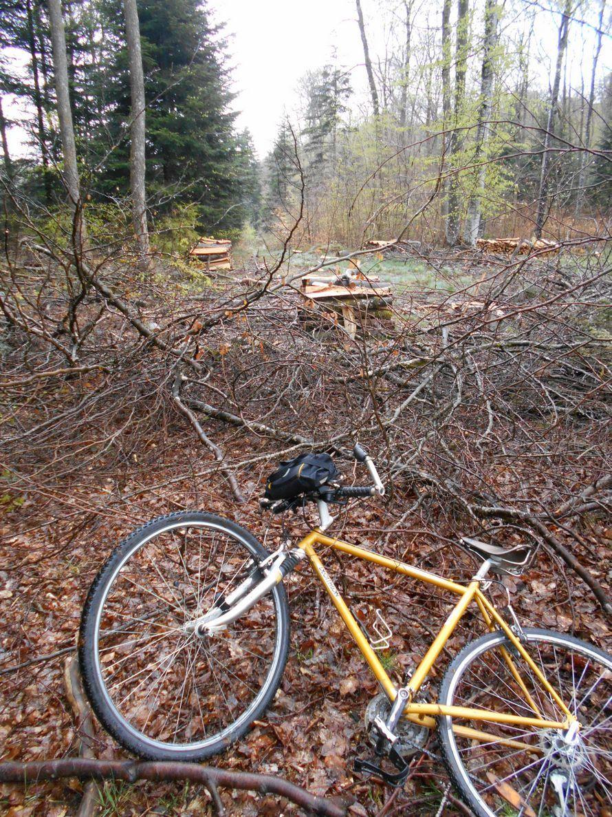 AUTUN : balade à VTC dans le joli bois de Montchauvoise