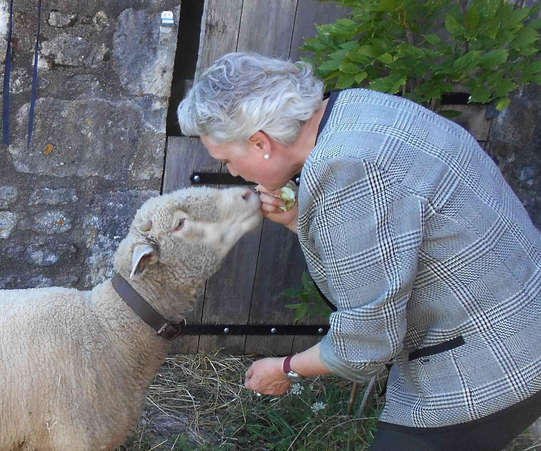 A Flavigny-sur-Ozerain : réhabiliter la race ovine par le truchement de Galatée la blanche brebis