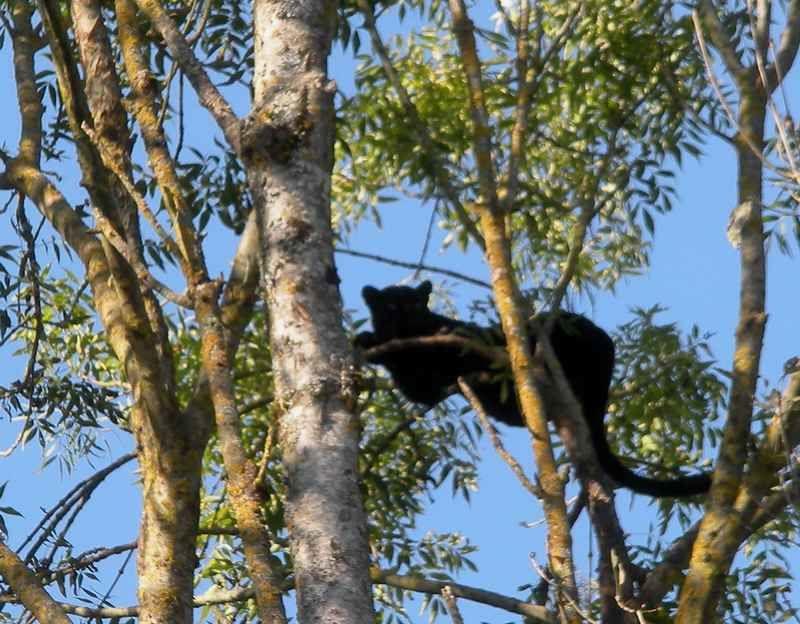A la chasse (photo) aux grands fauves : c'est au Parc des Félins