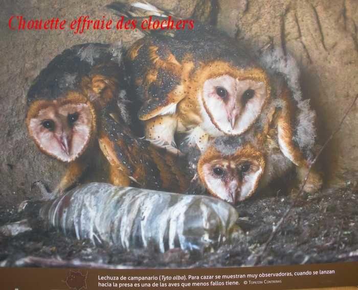 La biodiversité de l'état de Morelos s'expose à Cuernavaca