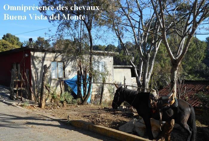 Première balade de ma 8e décennie : au village rural de Buena Vista del Monte, qui mérite bien son nom