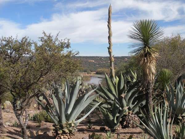 Mexique : El Charco del Ingenio : le pays des cactus au bord de l'eau