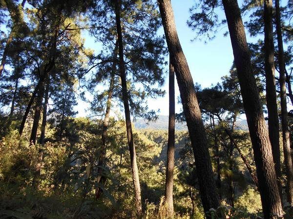 Balade dans un fraccionamiento d'altitude, dans la forêt cuernavacense