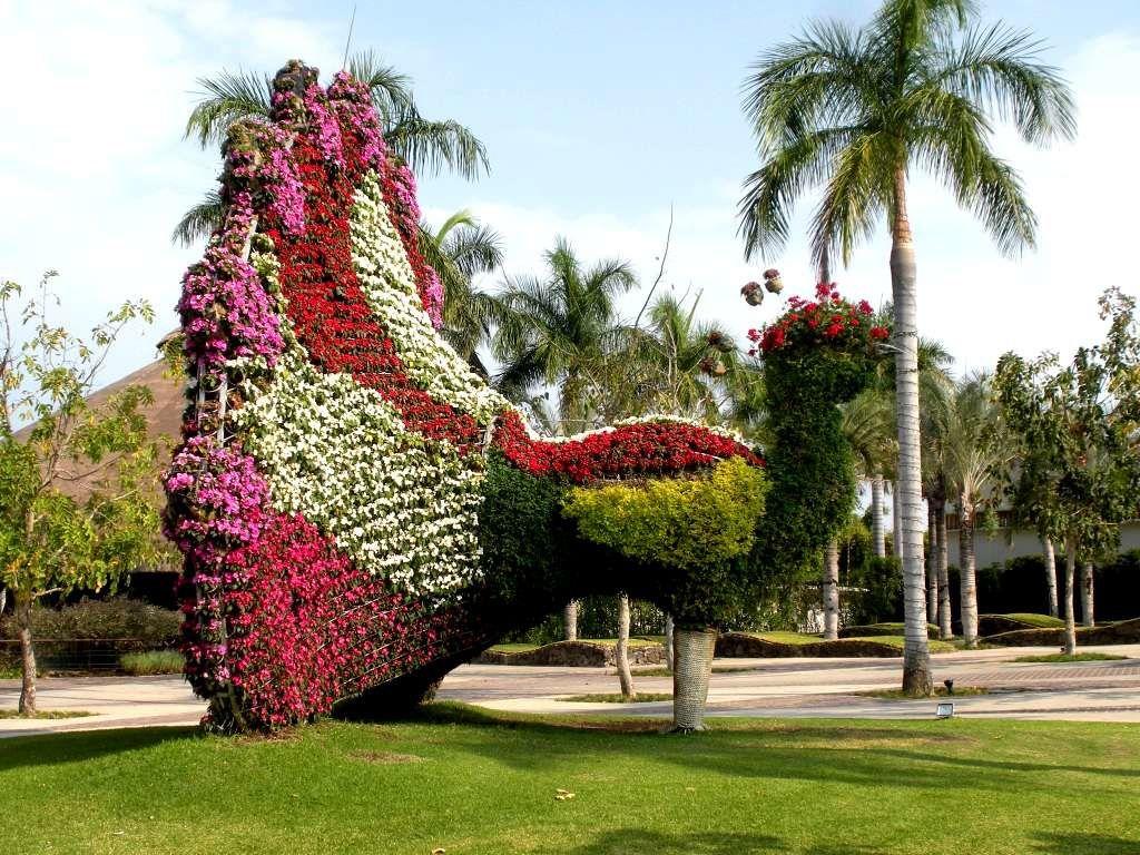 Aux Jardines de Mexico, les paons font la roue en fleurs