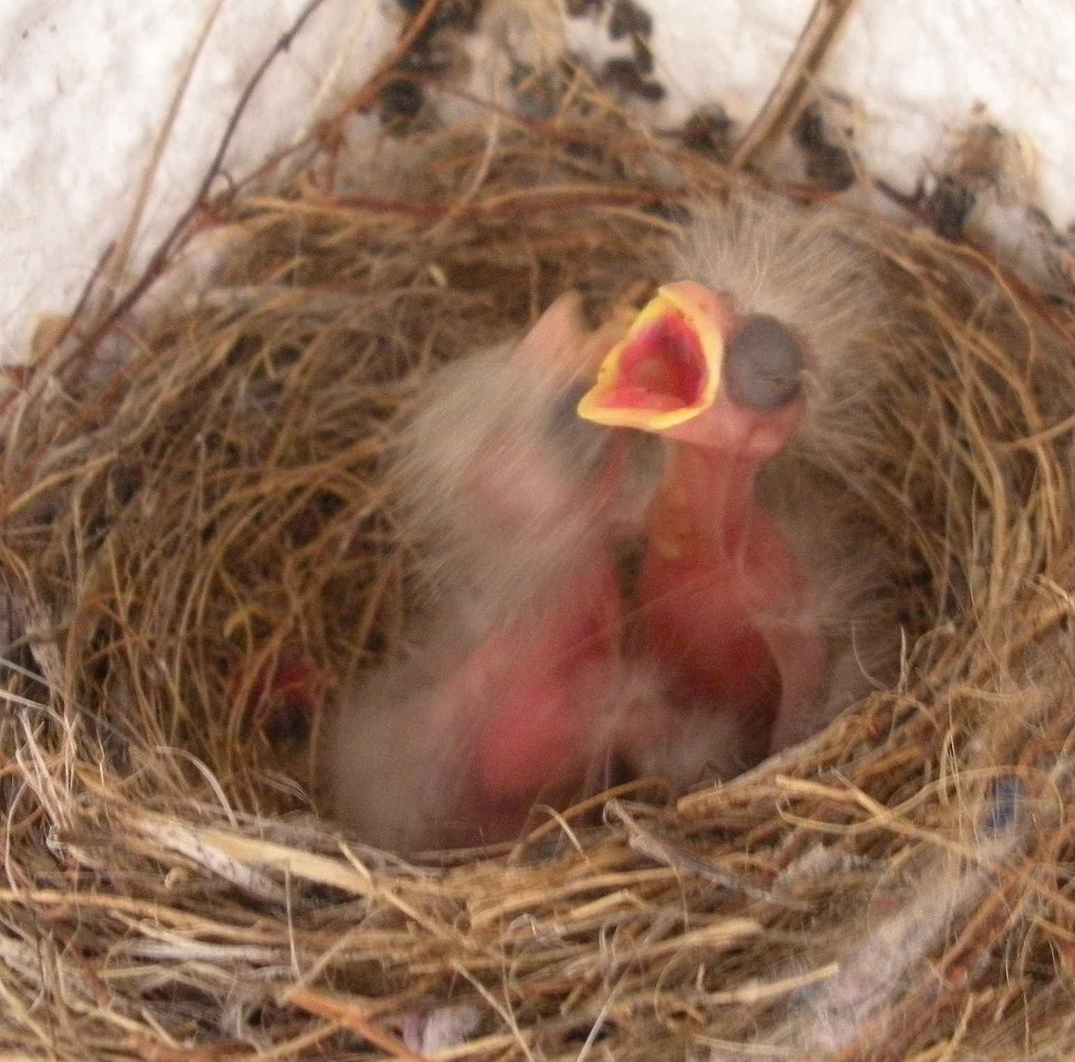 Photos des oiseaux : D. A.