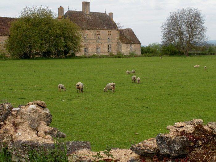 Une terre d'élevage dans des sites chargés d'histoire : l'Autunois