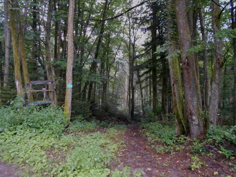 Plaisir de se perdre : Tout terrain dans les bois entre Autun et Broye
