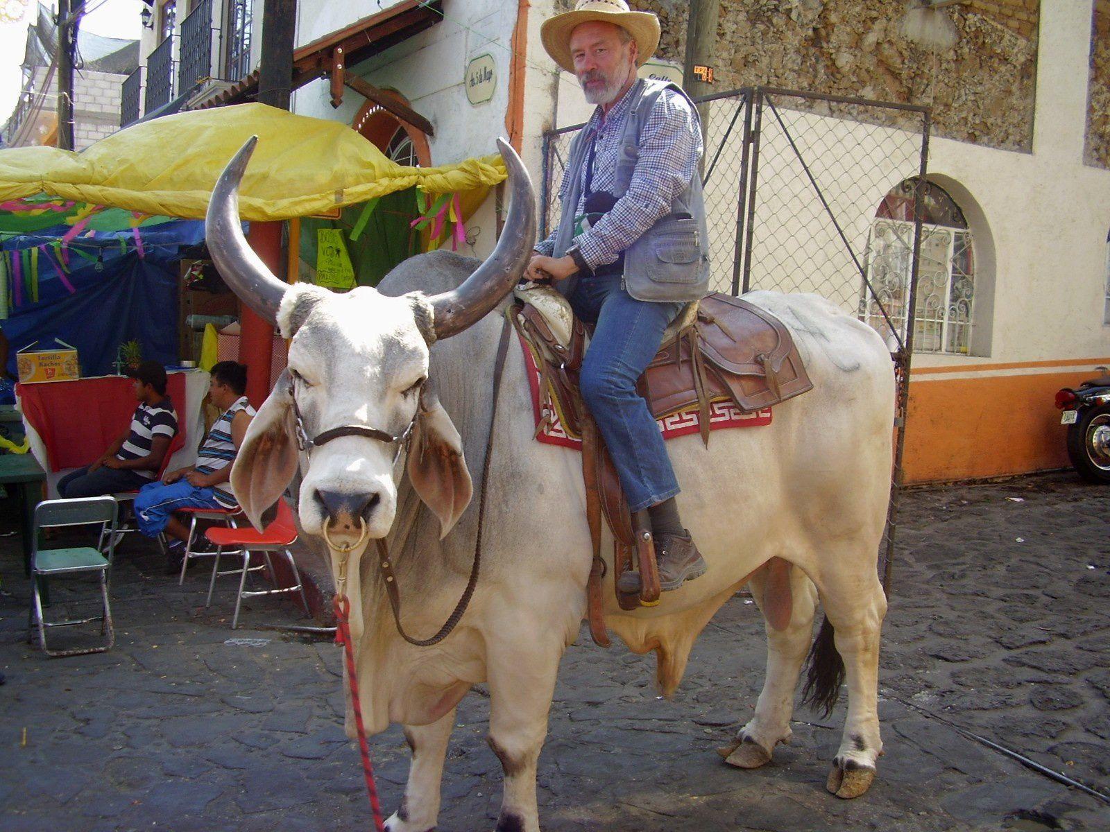 En selle sur un taureau blanc, mais pas du Charolais