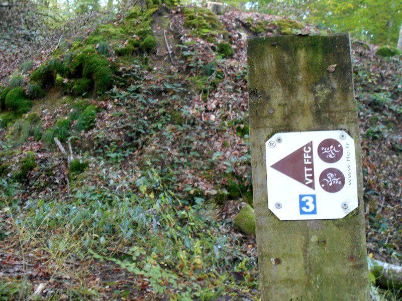 VTT en forêt ou parcours du combattant ?