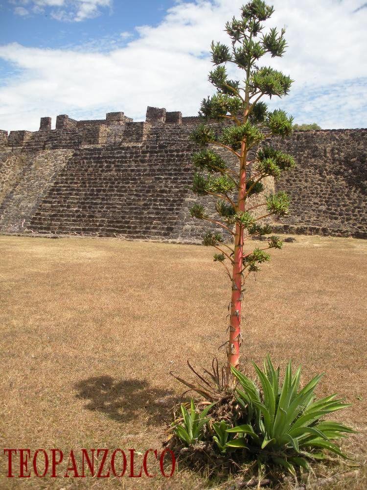 A la découverte de la nature près des pyramides mexicaines
