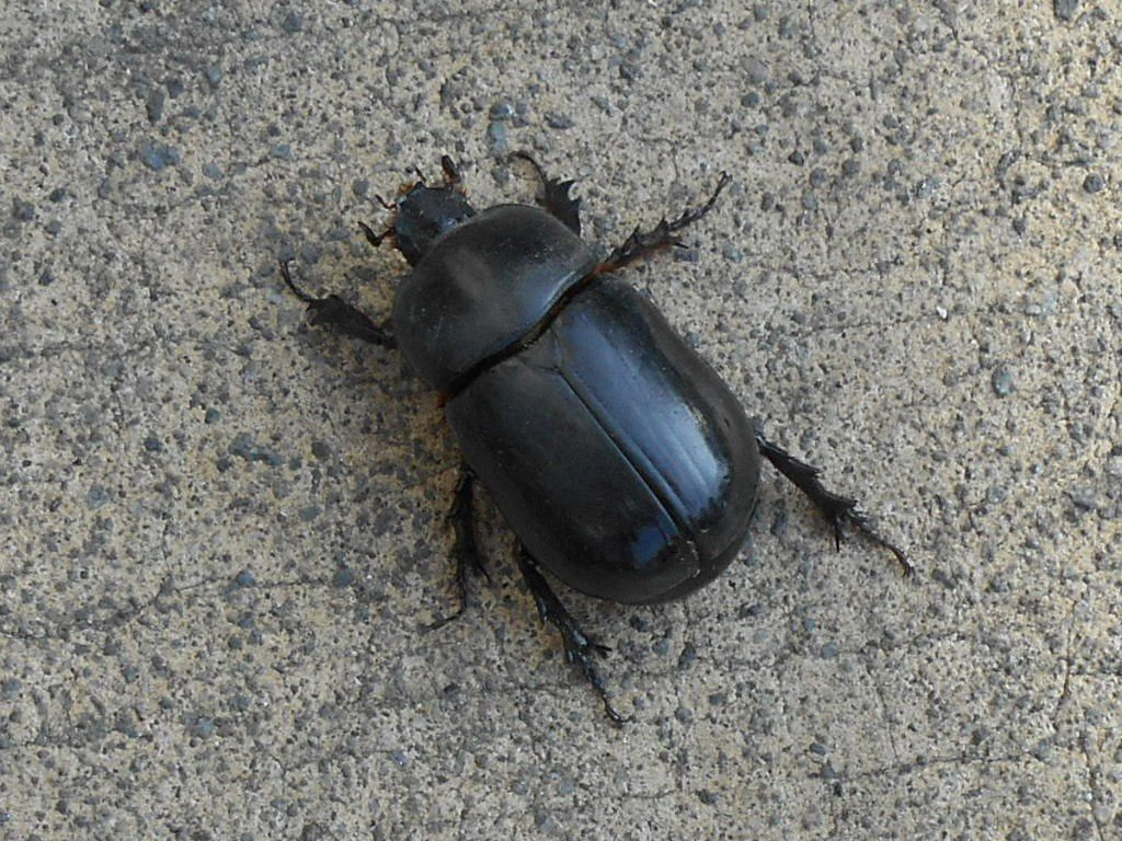 Un beau scarab e sur le parking du supermarch mon for Mega jardines de olarizu