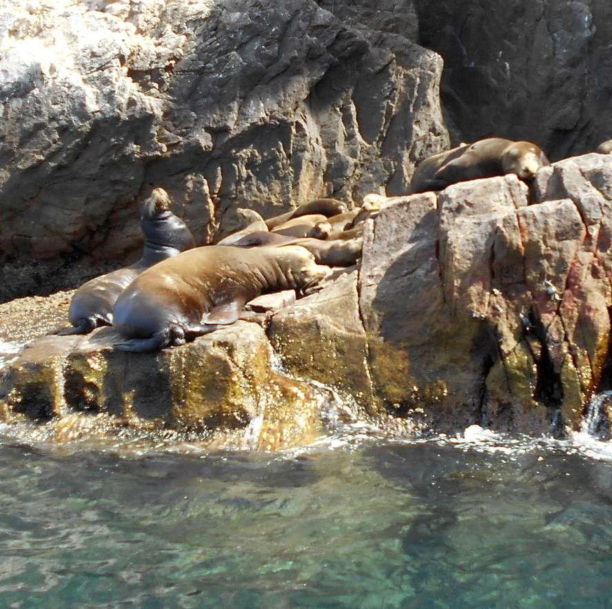 En bateau vers les lions de mer du bout du monde (11)