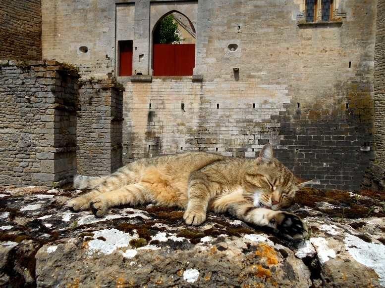 Dans ce décor, le chat du marquis de Carabas?