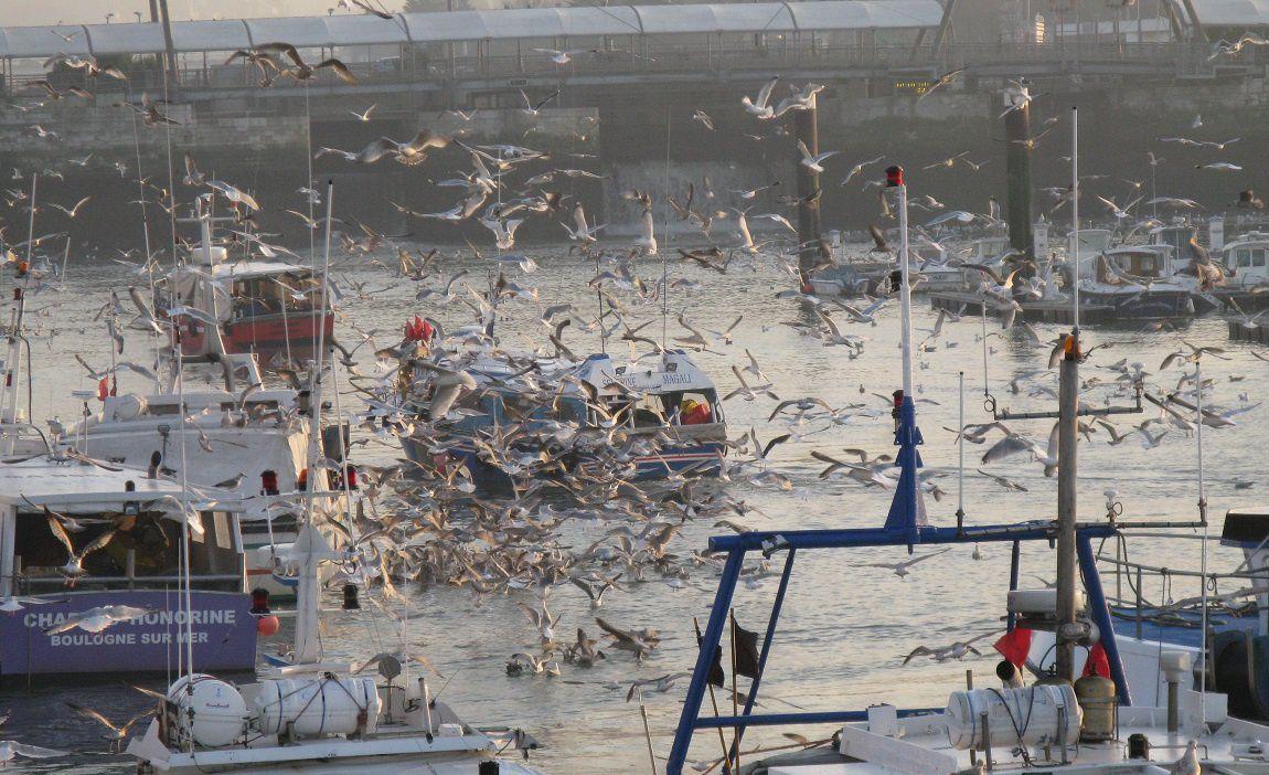 Envol d'oiseaux sur le port de Boulogne / Mer
