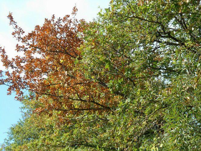 Les arbres ont soif en Bourgogne
