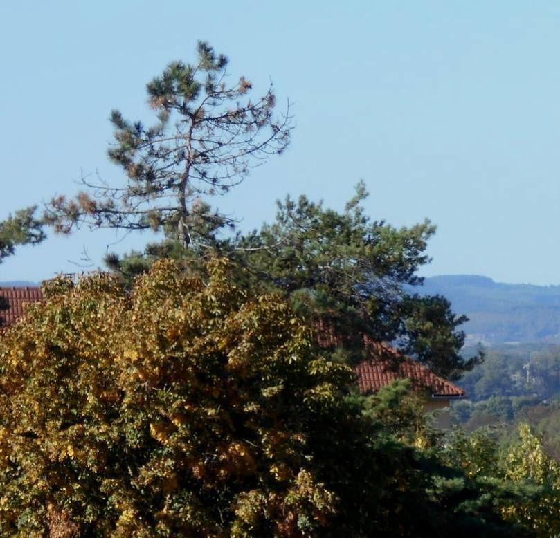 De la fenêtre un beau jour d'automne...
