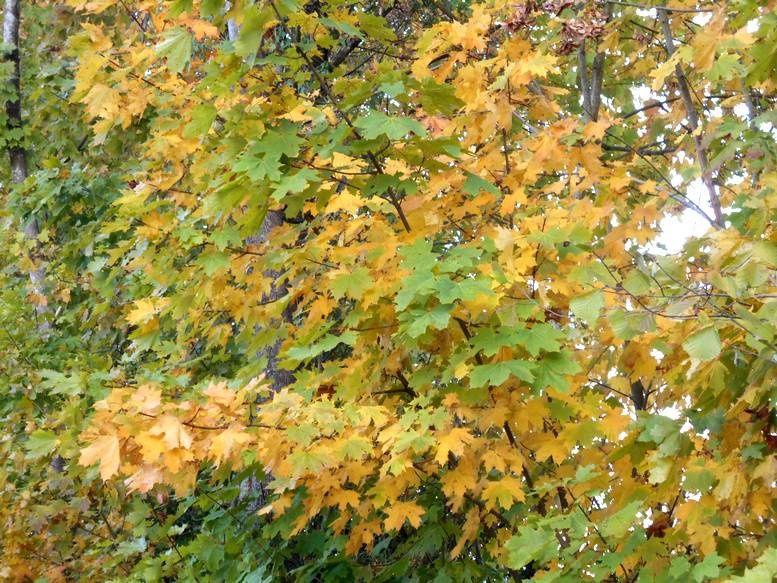 Les premiers ors de l'automne en Autunois