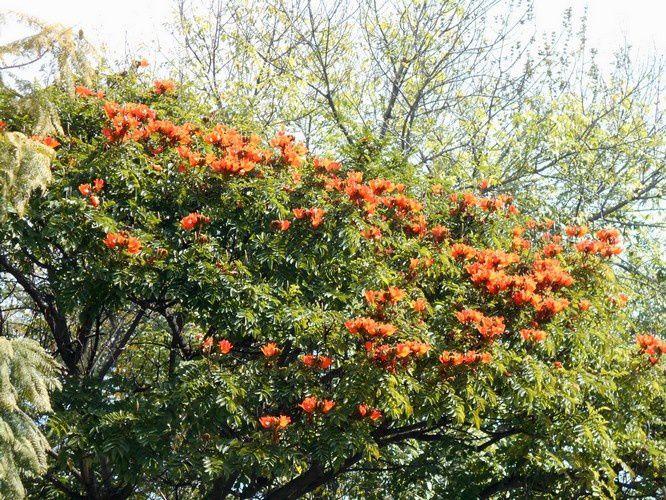 Voici des fruits, des fleurs...