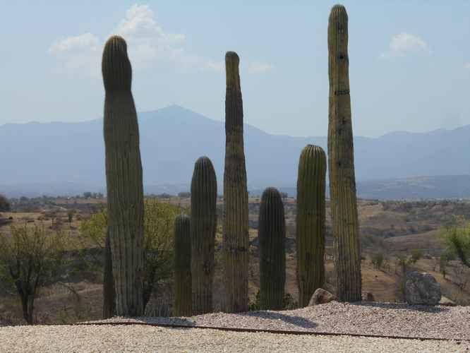 Aux jardines de Mexico : des cactus, mais aussi des orchidées