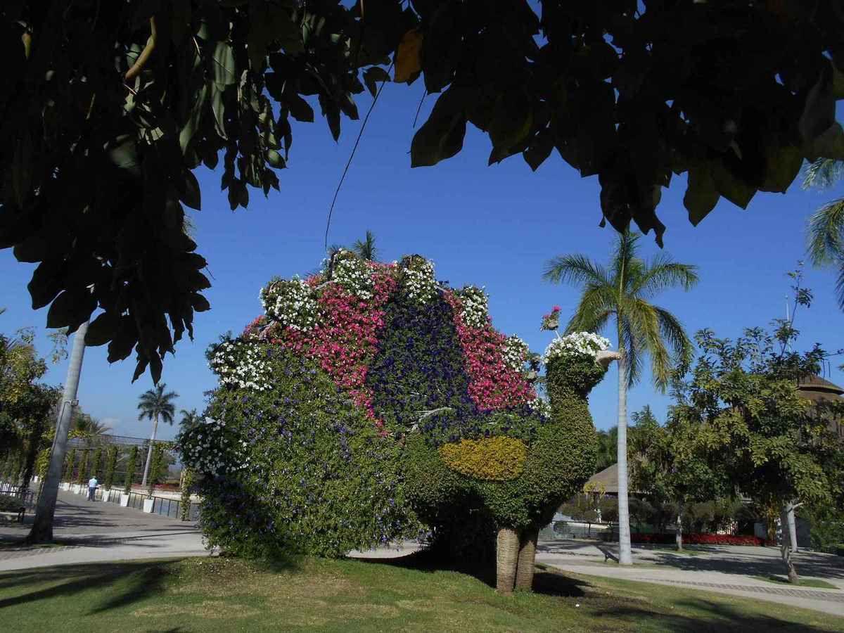 De retour aux Jardines de Mexico c'est toujours un enchantement