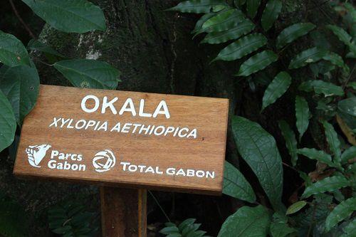 Arboretum Raponda Walker: Un petit coin de paradis