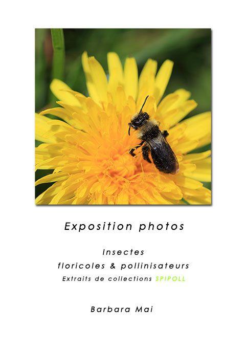Exposition photo - Médiathèque Chartres de Bretagne