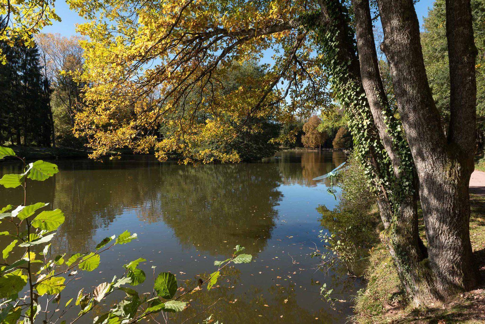 BRUYÈRES-VOSGES : la magie des couleurs d'automne à Pointhaie