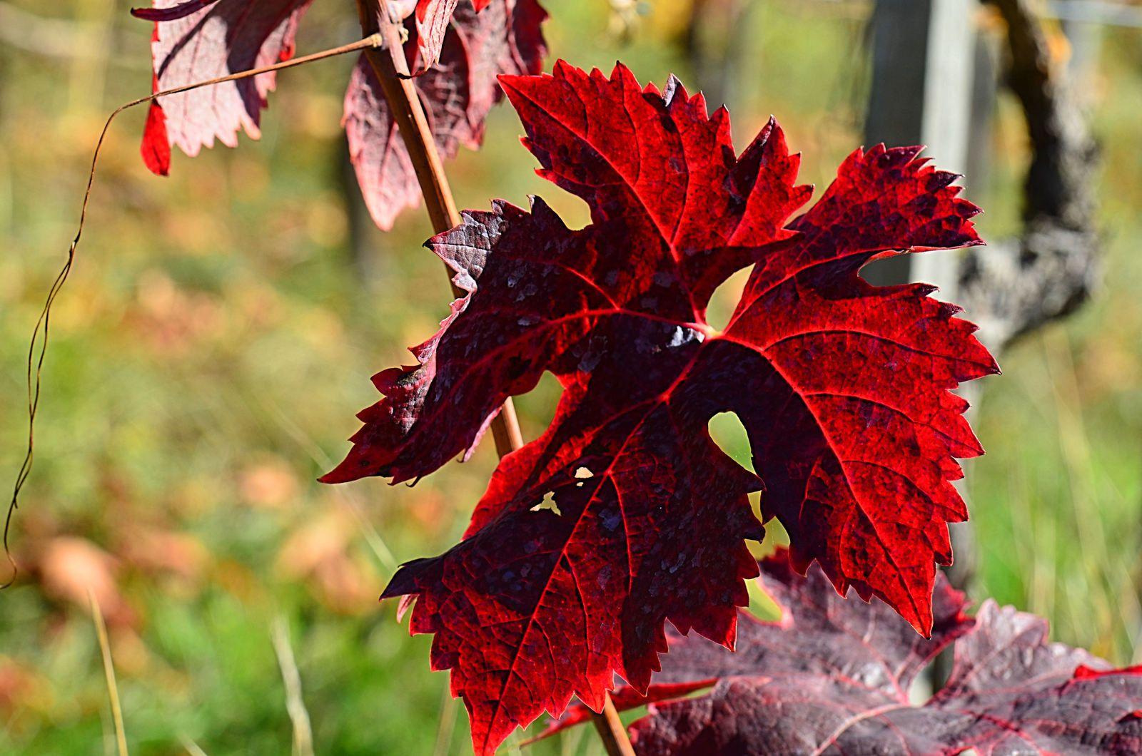 Atelier - couleurs d'automne