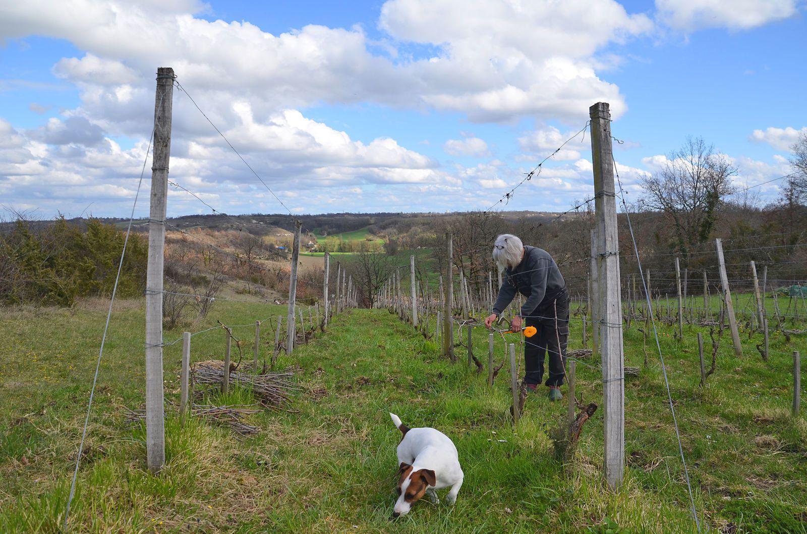 Domaine Les Cyprès - travail dans la vigne - tableau en cours