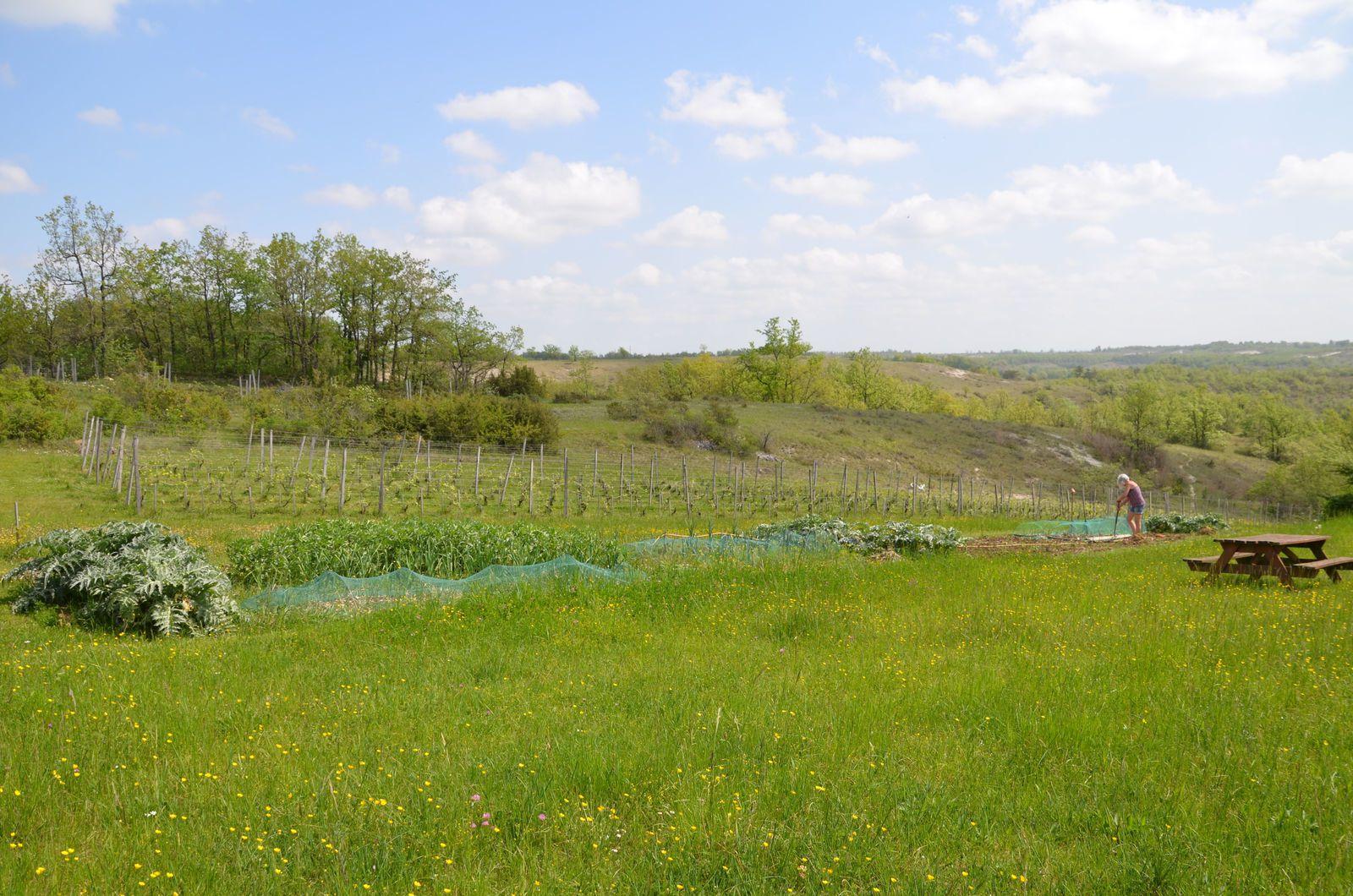 Domaine Les Cyprès - le vignoble - le potager