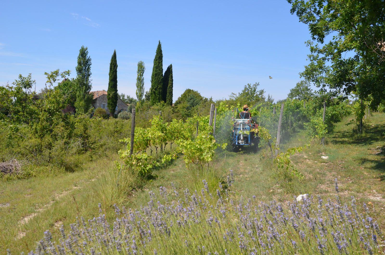Atelier - nouvelle ébauche - le vignoble