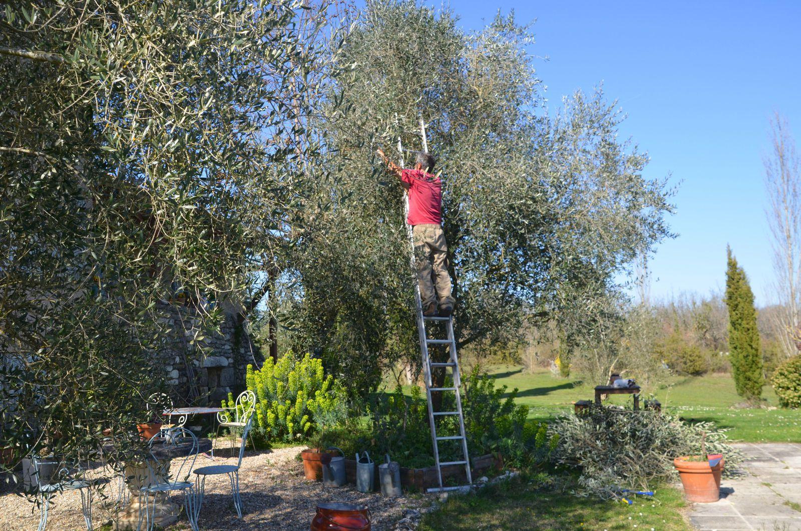 Domaine Les cyprès - le jardin du mois de mars